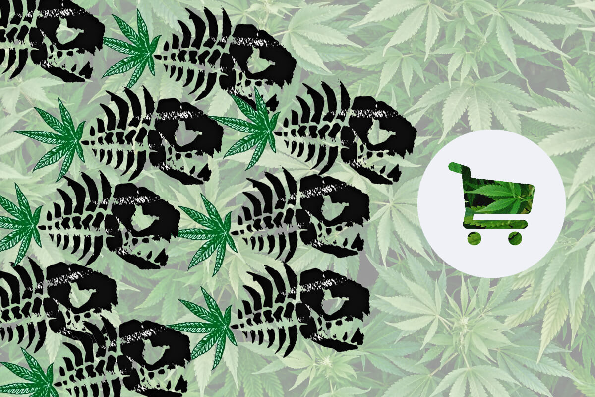 growing art cannabis light canapa legale cbd blog